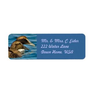 Etiquetas de endereço do êider etiqueta endereço de retorno