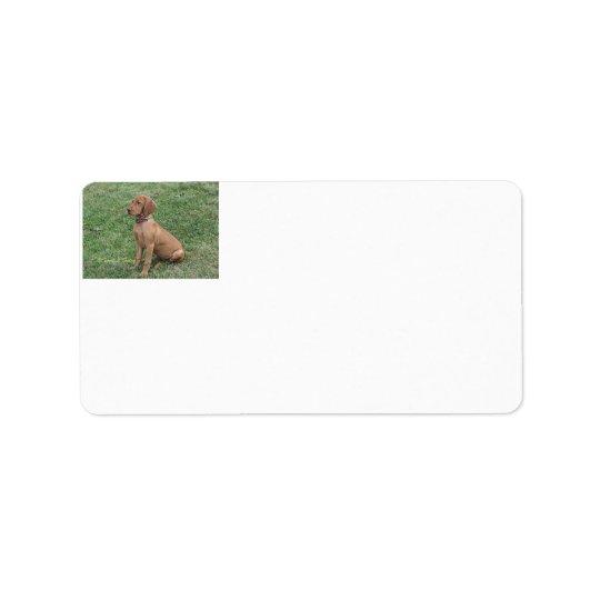 Etiquetas de endereço do filhote de cachorro de