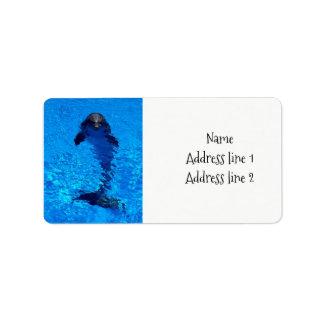 Etiquetas de endereço do golfinho etiqueta de endereço
