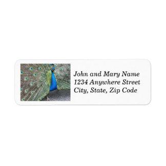 Etiquetas de endereço do remetente da foto do