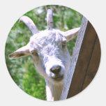 Etiquetas de sorriso da cabra adesivo redondo
