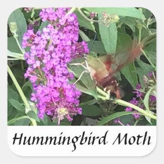 Etiquetas de vista originais da traça de colibri