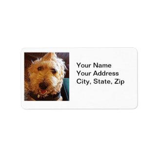 Etiquetas do cão da vira-lata de Labradoodle da