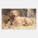 Etiquetas do cão de filhote de cachorro do golden