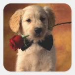 Etiquetas do cão de filhote de cachorro do golden adesivo quadrado