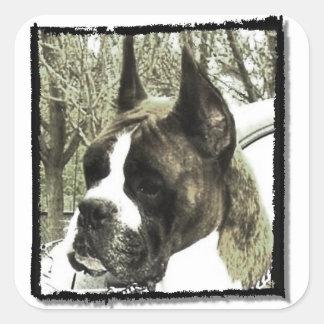 Etiquetas do cão do pugilista adesivo quadrado