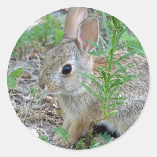 Etiquetas do coelho de felz pascoa