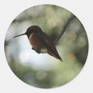 Etiquetas do colibri de Allen