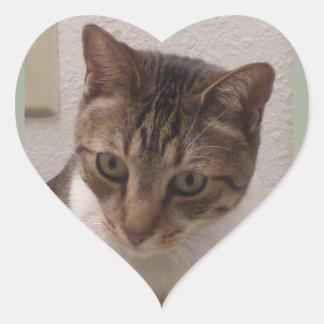 Etiquetas do coração do gato malhado de Brown