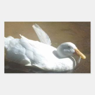 Etiquetas do pato da natação