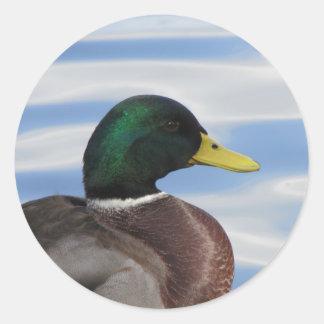 Etiquetas do pato selvagem
