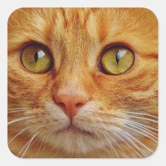 Etiquetas do quadrado do gato do gengibre -