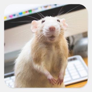 Etiquetas do rato de Marty - Standin alto