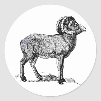 Etiquetas dos carneiros do Big Horn