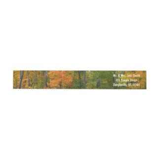 Etiquetas Fotografia da natureza do outono das árvores de