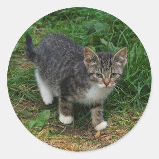 Etiquetas listradas do gatinho do tigre adesivo em formato redondo