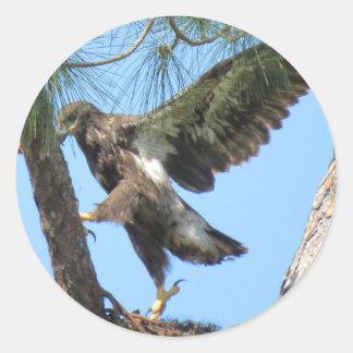 Etiquetas novas do estiramento da ioga de Eagle