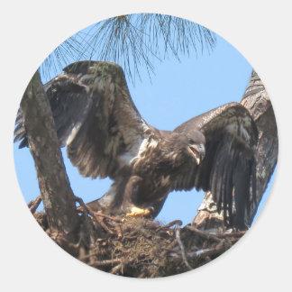 Etiquetas novas ferozes de Eagle