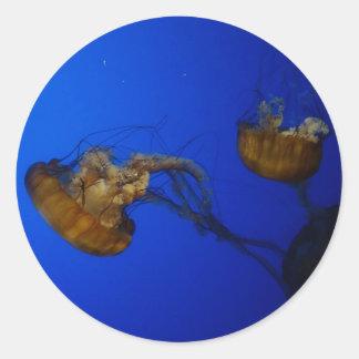 Etiquetas pacíficas das medusa da provocação do