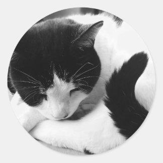 Etiquetas pretas & brancas da foto do gato adesivo