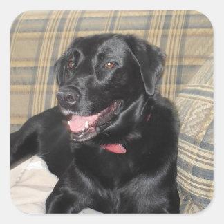 Etiquetas pretas de Labrador (folha de 20)