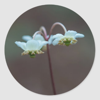 Etiquetas redondas do Wildflower listrado de Adesivo