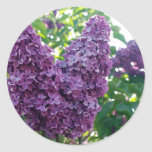 Etiquetas roxas dos Lilacs Adesivos