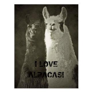 Eu amo alpacas! cartão postal