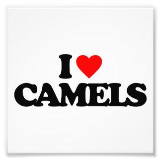 EU AMO CAMELOS IMPRESSÃO FOTOGRÁFICAS