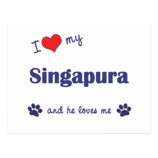 Eu amo meu Singapura (o gato masculino) Cartão Postal