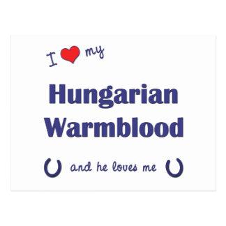 Eu amo meu Warmblood húngaro o cavalo masculino Cartões Postais