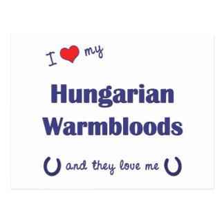 Eu amo meu Warmbloods húngaro os cavalos múltiplo Cartão Postal