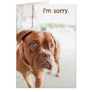 Eu sou cartão pesaroso da desculpa com cão culpado