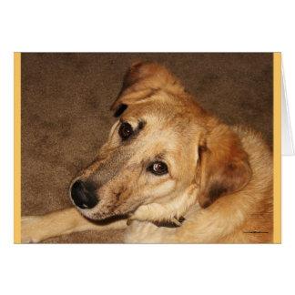 Eu sou desculpa pesarosa dos olhos de cão de cartão comemorativo