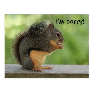 Eu sou esquilo pesaroso da desculpa