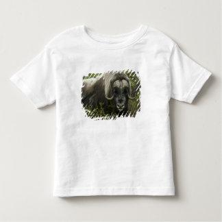 EUA, Alaska, Nome. Fim-acima do boi de musk T-shirts