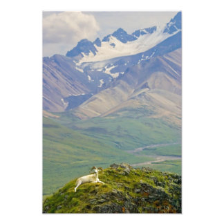 EUA, Alaska, parque nacional de Denali, policromo Impressão De Foto