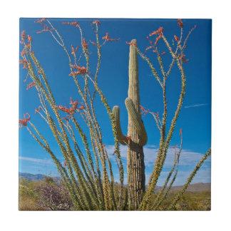EUA, arizona. Cacto no parque nacional de Saguaro