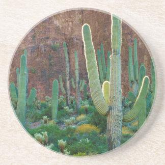 EUA, arizona. Campo do cacto do Saguaro por um Porta Copos Para Bebidas