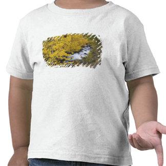 EUA, Califórnia. Bishop Angra e árvores do álamo Camiseta