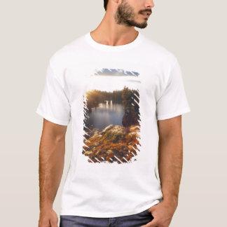 EUA, Califórnia, serra montanhas de Nevada. Por do Camiseta
