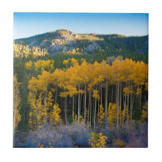 EUA, Colorado. Álamos tremedores amarelos