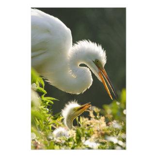 EUA, Florida, St Augustine, fazenda do jacaré Impressão De Foto