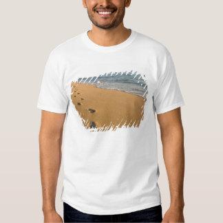 EUA, Havaí, Kauai, Kapa'a, beira-mar. RF) T-shirt