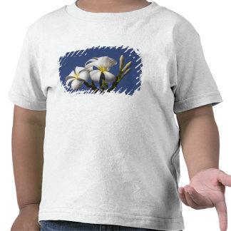 EUA, Havaí, Kauai, plumeria. branco Camiseta