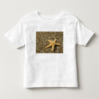 EUA, HI, Kauai, praia de vidro com peixes da Camiseta