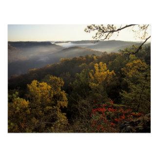 EUA, Kentucky. Floresta nacional de Daniel Boone Cartão Postal