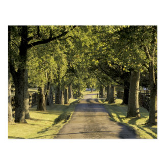 EUA, Kentucky, Lexington. entrada de automóveis Cartão Postal