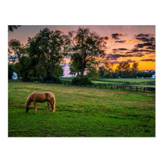 EUA, Lexington, Kentucky. Cavalo solitário no por Cartão Postal