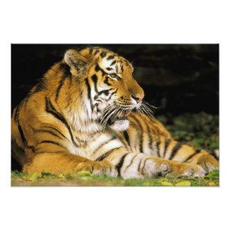 EUA Michigan Detroit Jardim zoológico de Detroi Foto Arte
